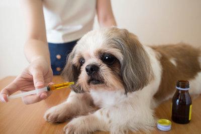 cute dog getting treated